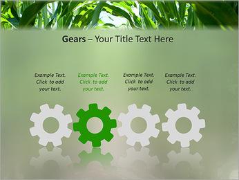 Récolte de maïs Modèles des présentations  PowerPoint - Diapositives 28