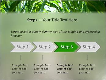 Récolte de maïs Modèles des présentations  PowerPoint - Diapositives 4