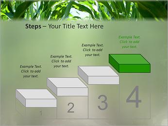 Récolte de maïs Modèles des présentations  PowerPoint - Diapositives 44