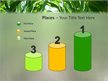 Récolte de maïs Modèles des présentations  PowerPoint - Diapositives 45