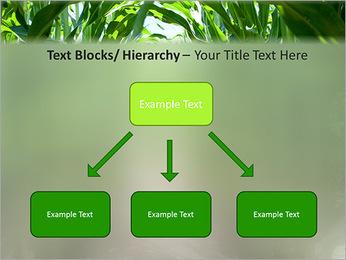 Récolte de maïs Modèles des présentations  PowerPoint - Diapositives 49