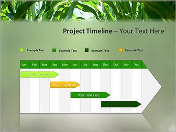 Récolte de maïs Modèles des présentations  PowerPoint - Diapositives 5