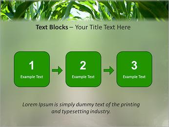 Récolte de maïs Modèles des présentations  PowerPoint - Diapositives 51