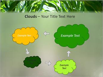 Récolte de maïs Modèles des présentations  PowerPoint - Diapositives 52