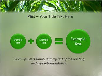 Récolte de maïs Modèles des présentations  PowerPoint - Diapositives 55