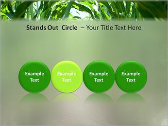 Récolte de maïs Modèles des présentations  PowerPoint - Diapositives 56