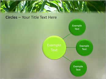 Récolte de maïs Modèles des présentations  PowerPoint - Diapositives 59