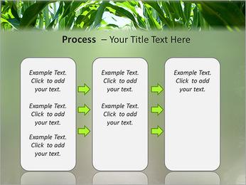 Récolte de maïs Modèles des présentations  PowerPoint - Diapositives 66