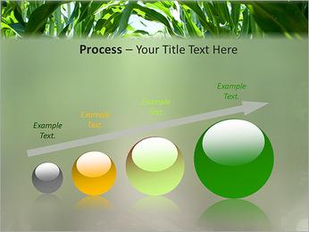 Récolte de maïs Modèles des présentations  PowerPoint - Diapositives 67