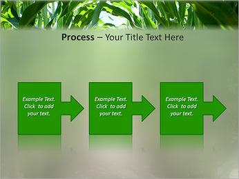 Récolte de maïs Modèles des présentations  PowerPoint - Diapositives 68