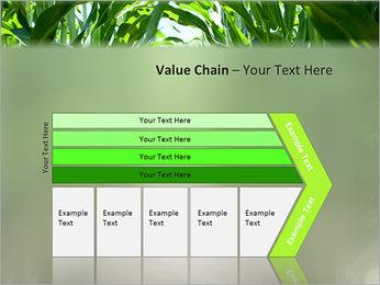 Récolte de maïs Modèles des présentations  PowerPoint - Diapositives 7