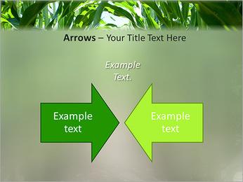 Récolte de maïs Modèles des présentations  PowerPoint - Diapositives 70