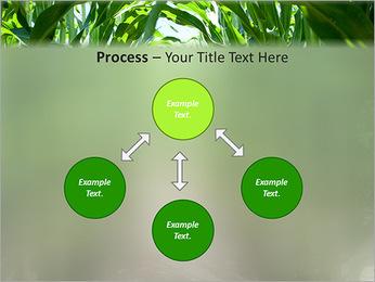 Récolte de maïs Modèles des présentations  PowerPoint - Diapositives 71
