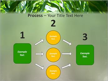 Récolte de maïs Modèles des présentations  PowerPoint - Diapositives 72