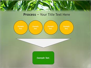 Récolte de maïs Modèles des présentations  PowerPoint - Diapositives 73