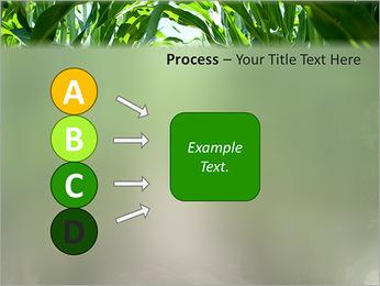 Récolte de maïs Modèles des présentations  PowerPoint - Diapositives 74