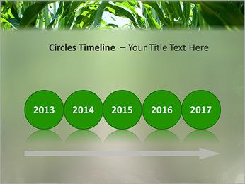 Récolte de maïs Modèles des présentations  PowerPoint - Diapositives 9