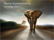 Elephant On The Road PowerPoint Templates