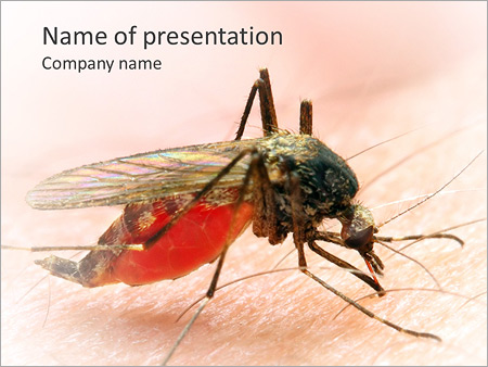Mosquito bite powerpoint template backgrounds id 0000004396 mosquito bite powerpoint template toneelgroepblik Images
