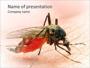 Picada de mosquito Modelos de apresentações PowerPoint