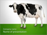 Bianco e nero Cow I pattern delle presentazioni del PowerPoint