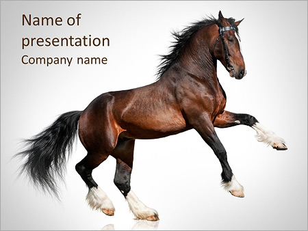 Nice horse powerpoint template backgrounds id 0000004423 nice horse powerpoint templates toneelgroepblik Choice Image