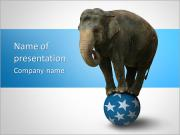 Elephant On Ball PowerPoint Templates