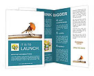 Humming Bird Brochure Templates