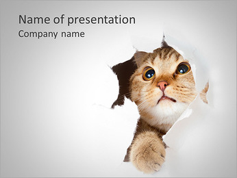 Cat Hides PowerPoint Template
