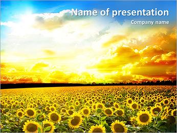Champ de tournesol au coucher du soleil Modèles des présentations  PowerPoint