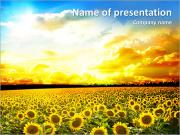Sunflower Field At Sunset PowerPoint Templates