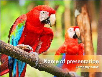 Red Parrots PowerPoint Template