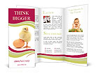 New Born Chicken Brochure Templates