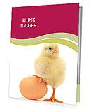 New Born Chicken Presentation Folder