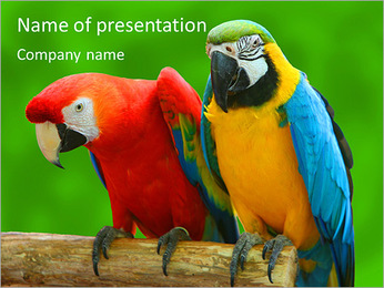 Couple Of Parrots PowerPoint Template