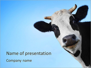 Funny smiling black and white cow on blue clear background PowerPoint Template