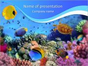 Vita Ocean I pattern delle presentazioni del PowerPoint