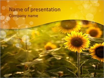 Tournesols dans le verger Modèles des présentations  PowerPoint