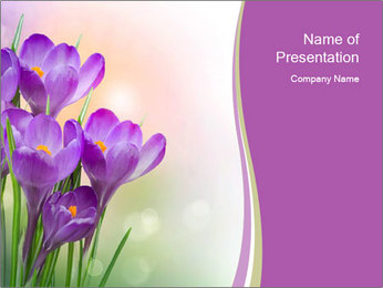 0000041307 PowerPoint Template