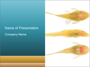 0000045888 PowerPoint Template