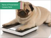 0000047329 PowerPoint Templates