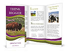 0000049003 Brochure Templates