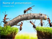 Community Of Ants PowerPoint Templates