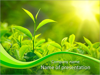 Plants In Sunlight PowerPoint Template