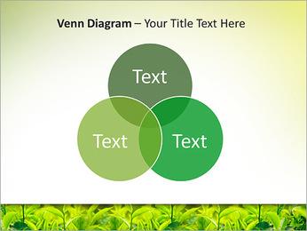 Plantes en plein soleil Modèles des présentations  PowerPoint - Diapositives 13