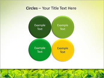 Plantes en plein soleil Modèles des présentations  PowerPoint - Diapositives 18
