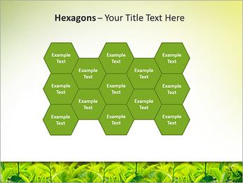 Plantes en plein soleil Modèles des présentations  PowerPoint - Diapositives 24