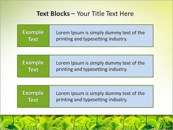 Plantes en plein soleil Modèles des présentations  PowerPoint - Diapositives 38