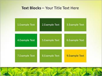 Plantes en plein soleil Modèles des présentations  PowerPoint - Diapositives 48