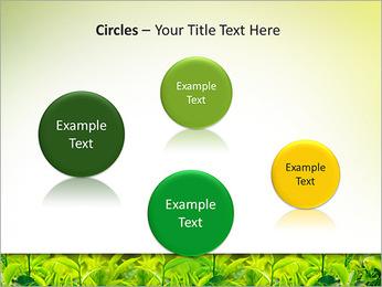 Plantes en plein soleil Modèles des présentations  PowerPoint - Diapositives 57